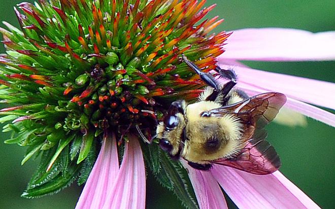 Bumble Bee London, ON