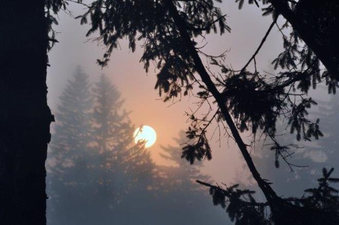 Foggy morning... Erin, ON