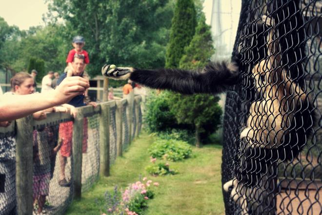 human-animal kindness Aylesford, NS