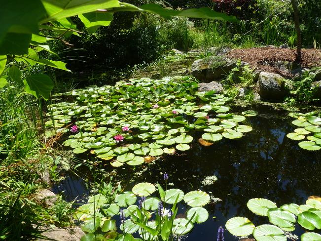 garden Nova Scotia