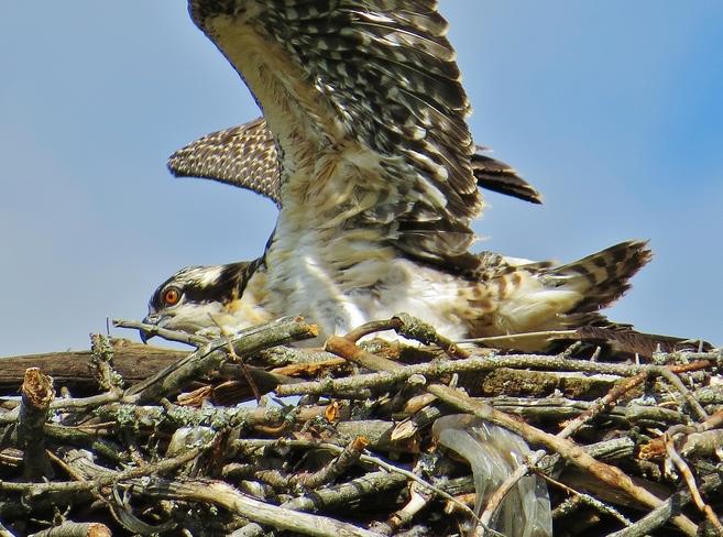 Look Mom, I'm flying!! North Bay, ON