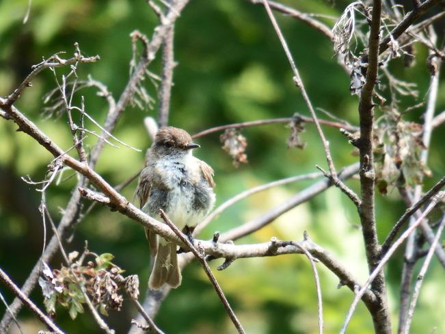 Birds Corbeil, ON
