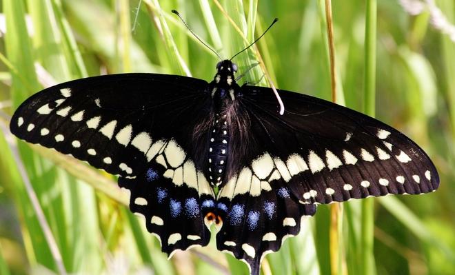 1st Butterfly....yaaa Scarborough, Toronto, ON
