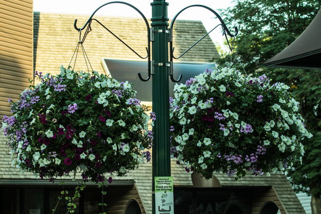 Summertime blooms Edmonton, AB