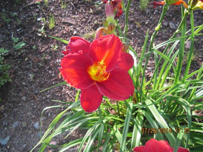 Flowers Saint John, NB