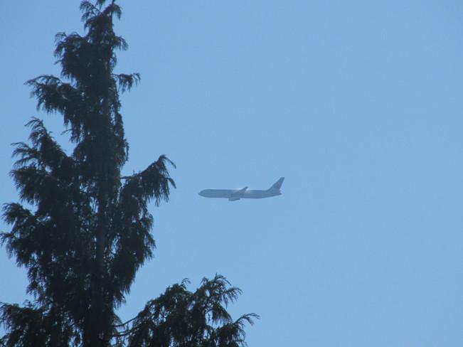 flying high Surrey, BC