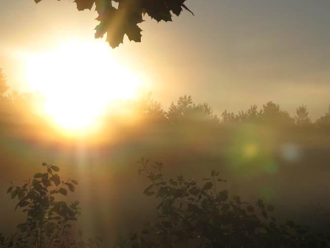 Green face in the sunrise Miramichi, NB