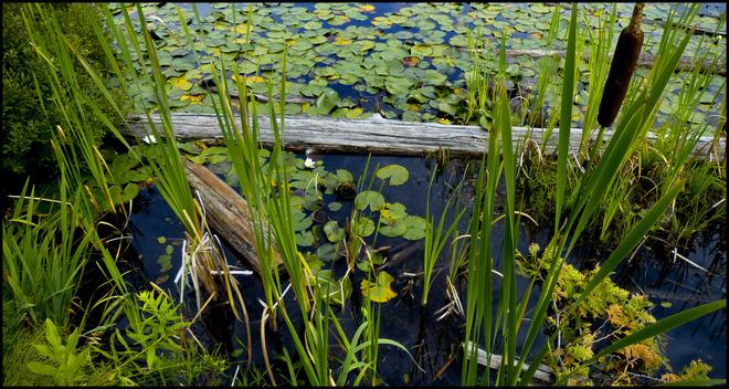 Sheriff Creek, Elliot Lake.