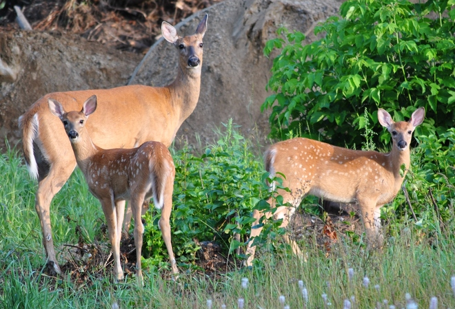 Pretty Deer Kakabeka Falls, Oliver Paipoonge, ON