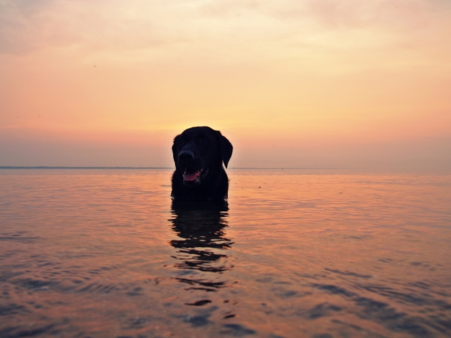 dog days of summer Sarnia, ON
