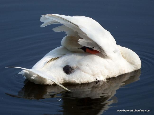 Undercover Swan Ottawa, ON