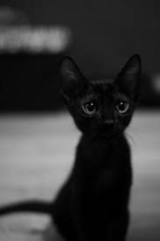a baby black cat with grey eyes Appleglen Park Southeast, Calgary, AB