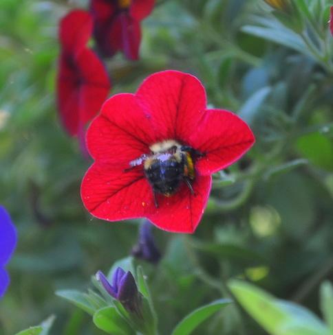 Little Bee Butt London, ON