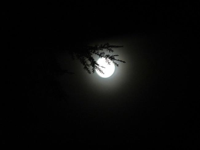 moon shine Surrey, BC