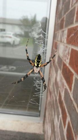Spiderman! Fredericton, NB