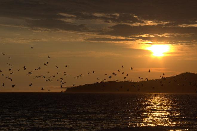 Flock of Seagulls. 7373-7705 West Coast Road, Sooke, BC V9Z, Canada
