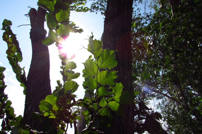 Sun peeking throughtrees Stony Mountain, Manitoba Canada
