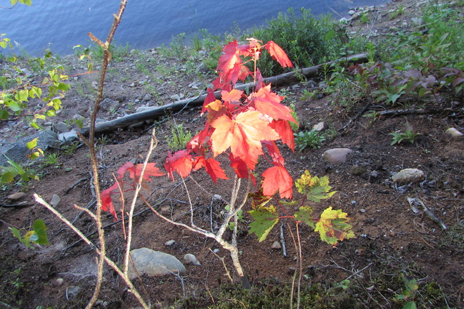 Fall colours Panuke Lake, NS