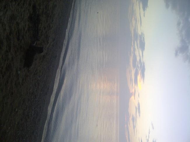 Dog Watching Sunset Point Clark, Ontario Canada