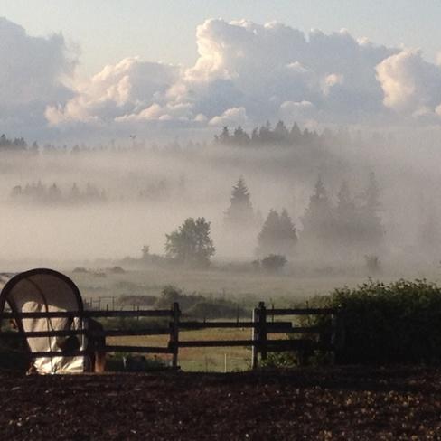 my horse farm Nanaimo, British Columbia Canada
