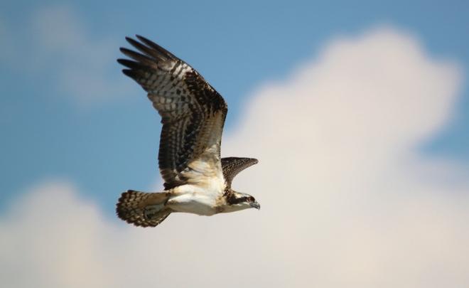 Wildlife seen in Kananaskis and Banff Peter Lougheed Provincial Park - Kananaskis Country, Kananaskis, AB