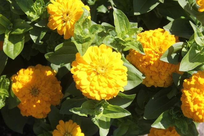 Manitoba Legislature Outdoor Flower Garden Winnipeg, MB