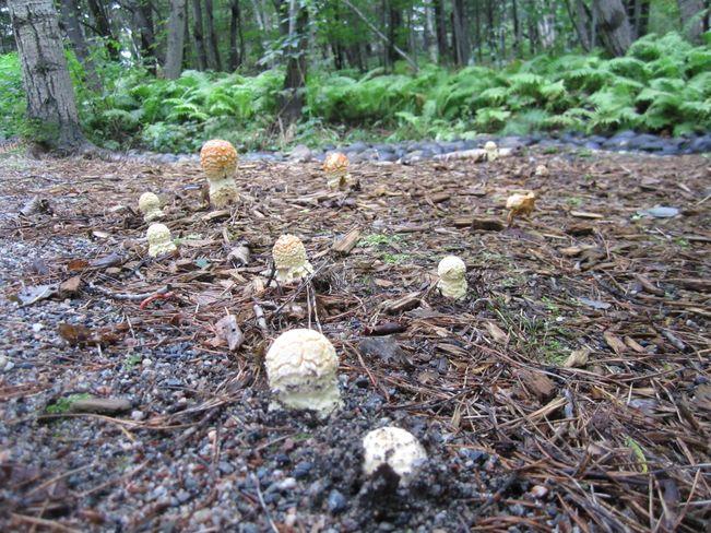 Mushrooms Popping Up