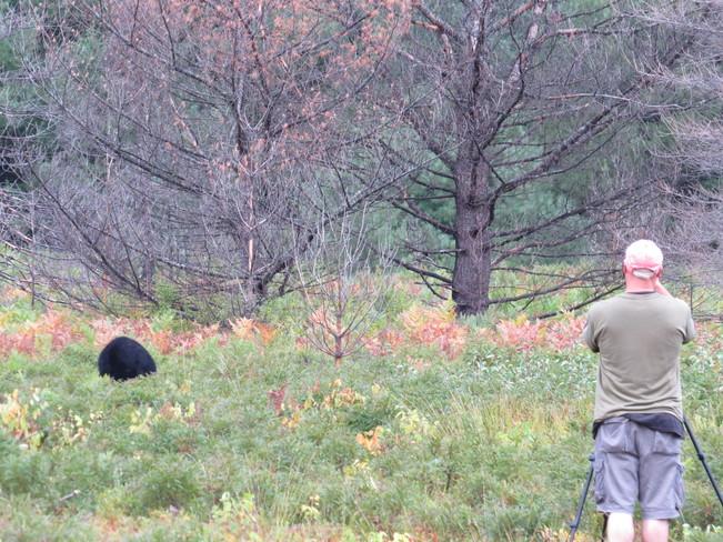 Black Bear Algonquin, ON
