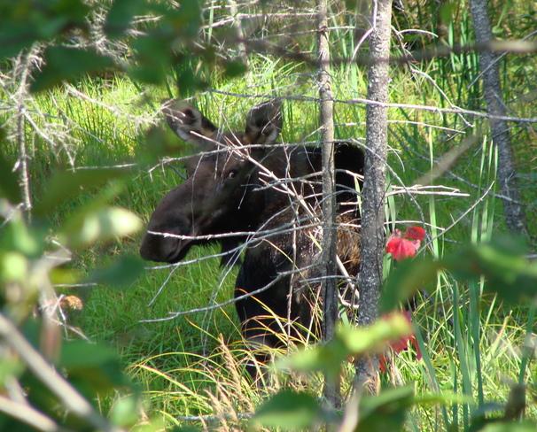 Algonquin Algonquin Provincial Park, Nipissing District, ON