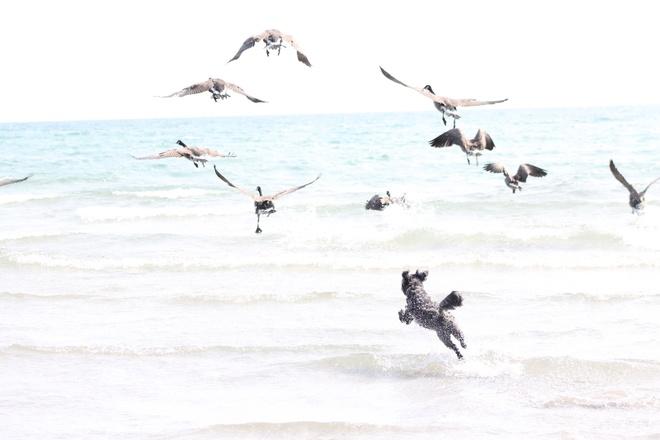 Gone to the birds 12271 Northumberland County Road 2, Alnwick/Haldimand, ON K0K, Canada