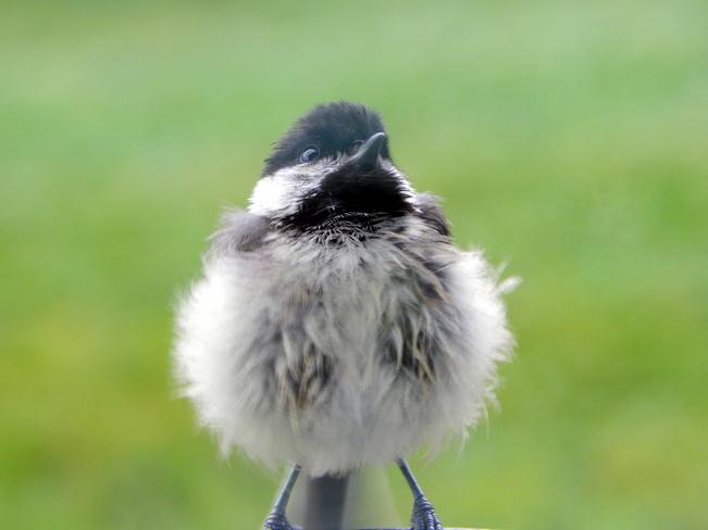 Close encounters of the bird kind Kingston, NS
