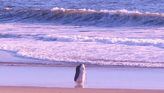 Romancing the waves. Santa Cruz, California, United States