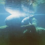 Un bébé hippotame avec sa maman.
