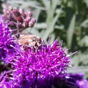 Insecte.
