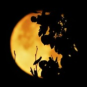 Moon-Art