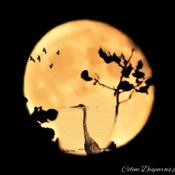 Moon-Art.