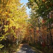 Sentier d' automne.