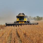 L' agriculture.