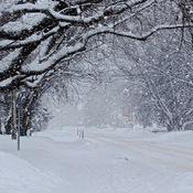 Gros flocons de neige