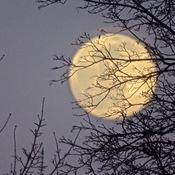 Pleine lune ce soir!