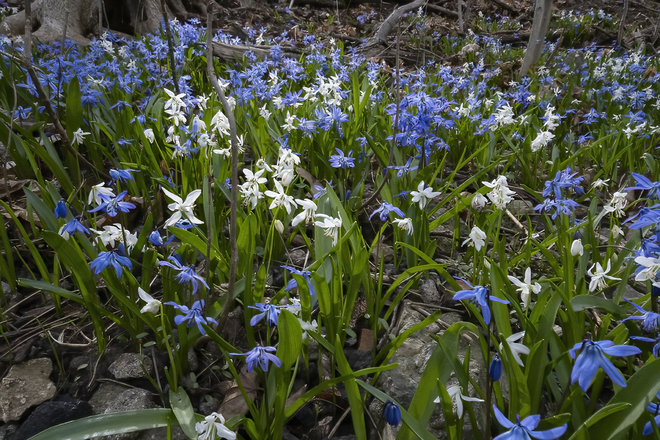 Spring in Mt. Pleasant Ravine Toronto, ON