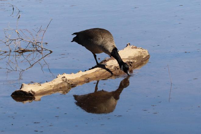 Kissing a reflection..... Stoney Creek, Ontario, CA