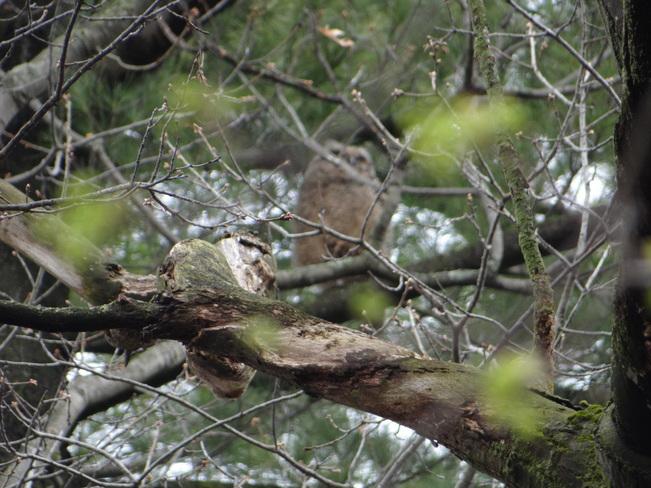 The Owl (Child) @ High Park High Park, Bloor Street West, Toronto, ON