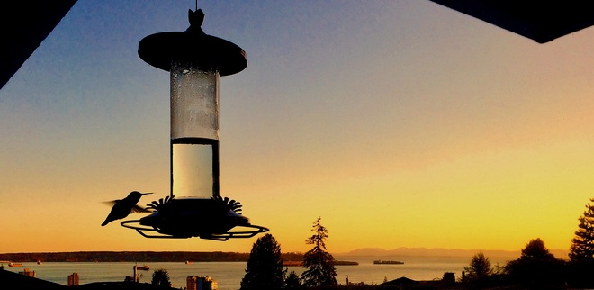 HUMMINGBIRD SUNSET West Vancouver, BC