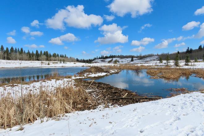 Beautiful April Snow in Calgary Fish Creek Provincial Park, Calgary, AB