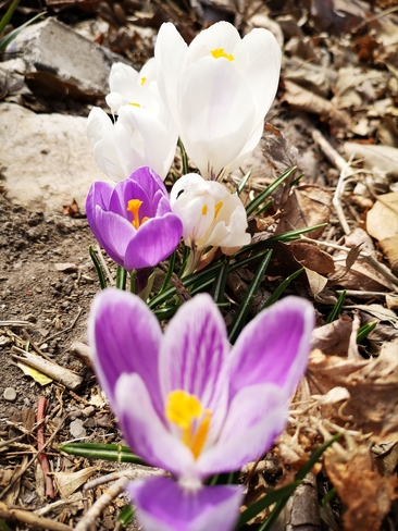 bloom Markham, ON