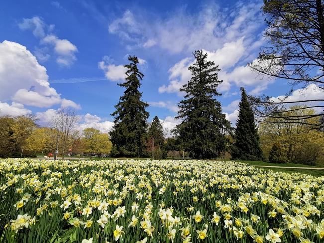 Springtime Flowers London, ON