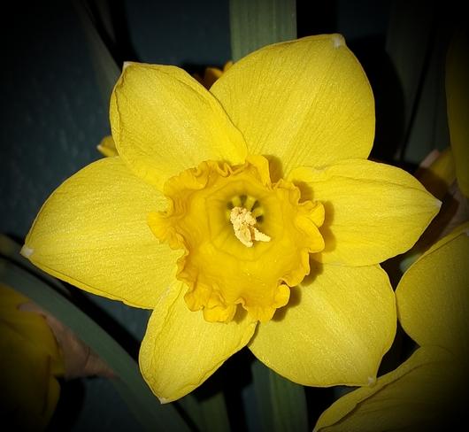 Spring has sprung Fort Frances, ON