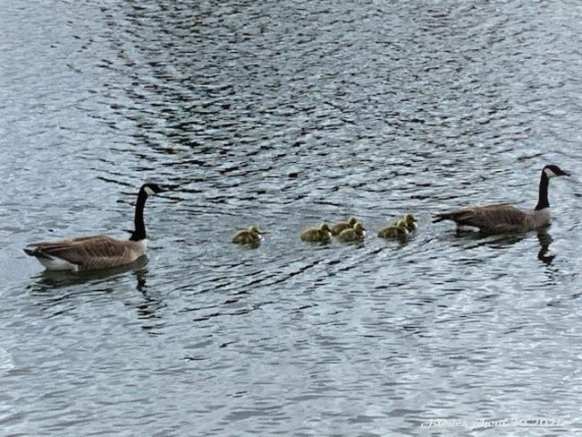 Springtime Loafers Lake, Brampton, ON