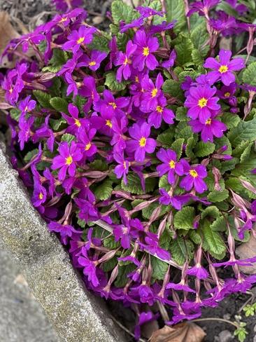 Spring blooms Hamilton, ON